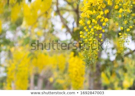 Yellow flower petals drop on walkway Stock photo © Ansonstock