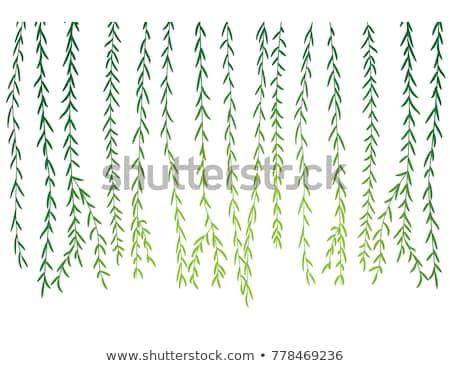 willow branch Stock photo © RuslanOmega