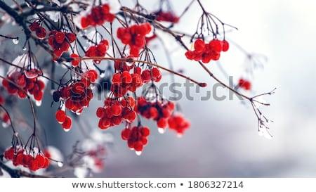 氷 · 茂み · 冬 - ストックフォト © pakhnyushchyy