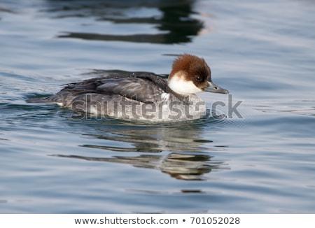 Сток-фото: женщины · утки · отражение · плаванию · воды