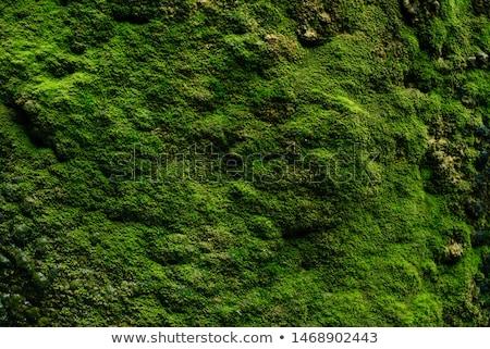 Verde musgo textura pequeno folhas Foto stock © creisinger