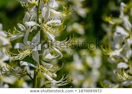 bush of green hemp closeup Stock photo © mycola