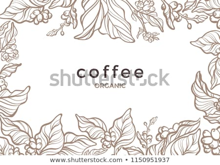 Abstract Coffee Border Stock photo © adamson