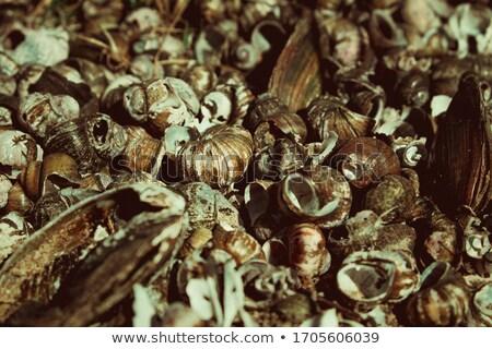 frutti · di · mare · mercato · Francia · alimentare · shell · riso - foto d'archivio © gemenacom