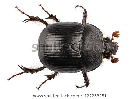 Escaravelho branco eps 10 projeto preto Foto stock © Istanbul2009