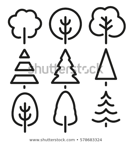 a coloured sketch of a pine tree stock photo © bluering