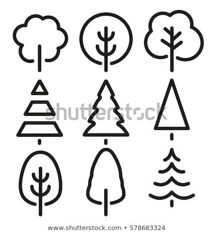 Schets pijnboom illustratie witte ontwerp achtergrond Stockfoto © bluering
