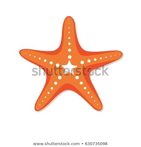 beyaz · mercan · denizyıldızı · yalıtılmış · doğa · deniz - stok fotoğraf © tycoon
