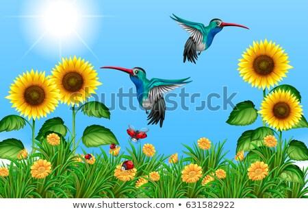 Dois voador girassol campo ilustração natureza Foto stock © bluering