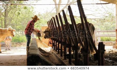 Farmer Feeding Animals Peasant Man At Work In Farm Stock photo © diego_cervo