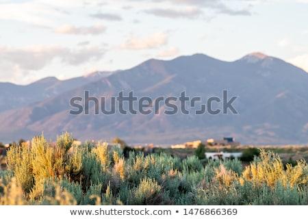 Sagebrush NM Desert Sangre De Cristo Mountains  Stock photo © Qingwa
