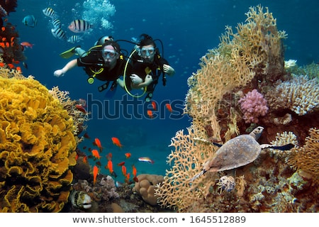Scuba diving at coral reef under water in tropical ocean Stock photo © Kzenon
