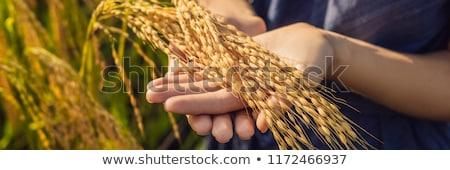 Stock fotó: Nő · érett · aratás · rizs · pelyhek · liszt
