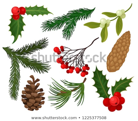 Red Pine cone of a  coniferous tree Stock photo © AlessandroZocc