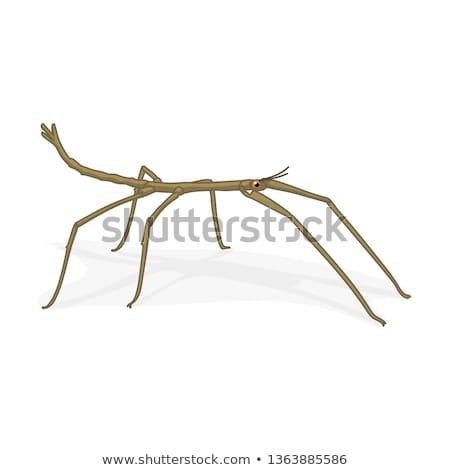 Mascot Walking Sticks Illustration Stock fotó © VetraKori