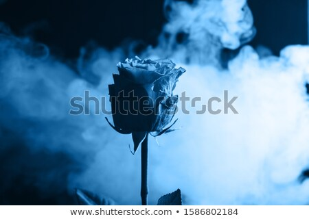 Classic blue smoke of trend colour of the year 2020. Stock photo © artjazz