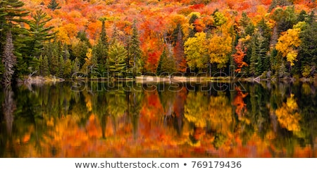 Colorful landscape park with beautiful trees and water Stock photo © Melnyk