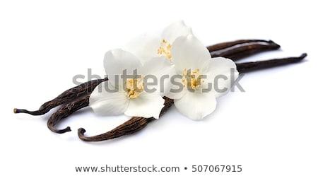 Vanilla pod Stock photo © leeser