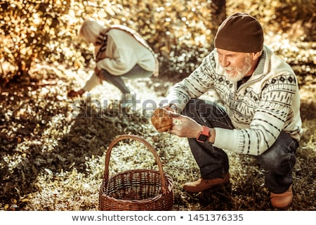 Couple gathering mushrooms in park Stock photo © photography33