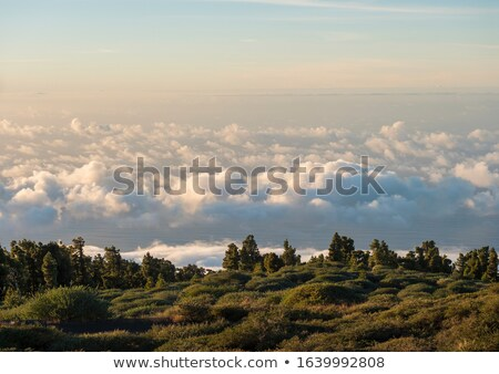 La Palma sunset over sea of clouds Stock photo © lunamarina