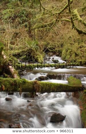Torrente acqua rocce caduta Oregon legno Foto d'archivio © cboswell