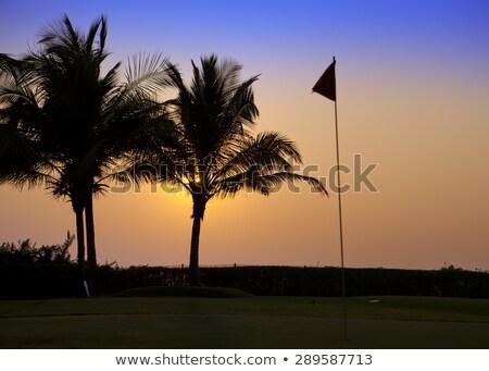 Solitário árvore campo de golfe vazio outono grama Foto stock © CaptureLight