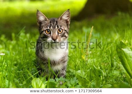 Kot trawy domu zielone wolna puli Zdjęcia stock © cheyennezj