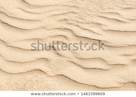 砂 · 砂漠 · リップル · スカラベ · 足跡 · 夏 - ストックフォト © snyfer