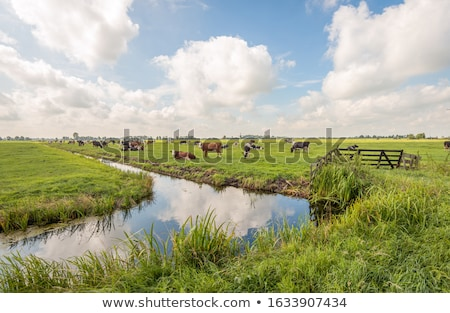 grassland with ditch stock photo © w20er
