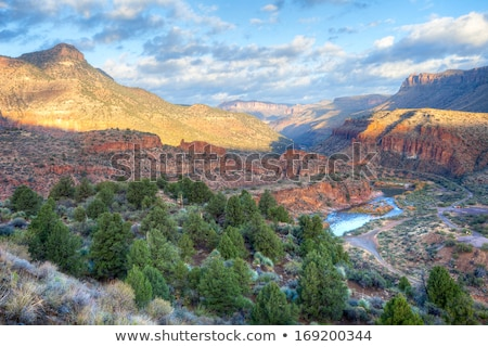bos · Arizona · bergen · hemel · Blauw · borstel - stockfoto © meinzahn