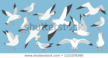 Stock photo: sea gull flying in the blue sky