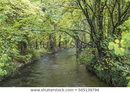 Fluss grünen Bäume München schönen Holz Stock foto © meinzahn