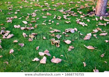 Morto folhas grama grama verde horizontal imagem Foto stock © Koufax73