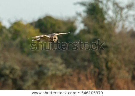 Chouette sussex campagne chasse nature Photo stock © suerob