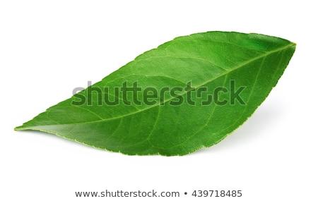все оранжевый листьев свежие белый Сток-фото © Digifoodstock
