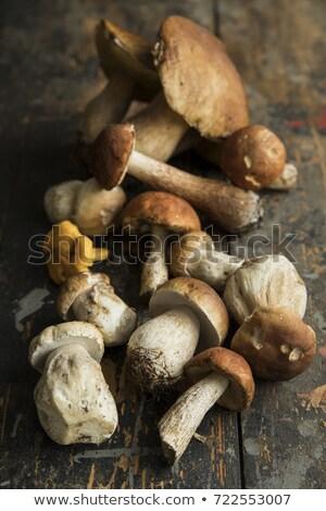 fresh edible mushroom (cep) Stock photo © Digifoodstock