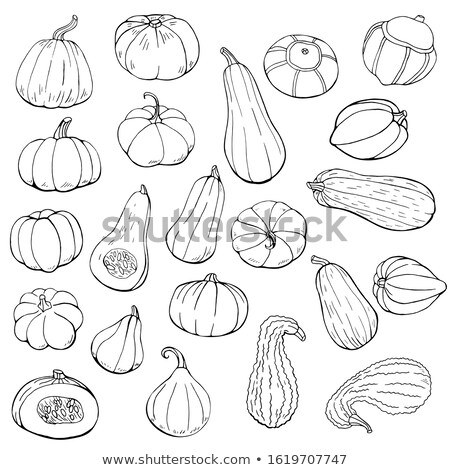 Isolated butternut and carnival squash on white Stock photo © njnightsky