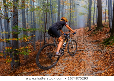 Stock photo: Mountain biker riding cycling in autumn forest
