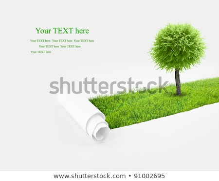 Green Grass And Ripped Paper Transparent Background  Stock photo © adamson