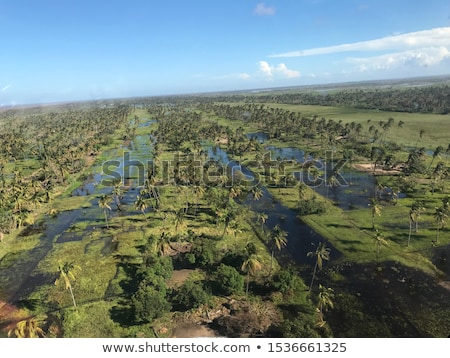 Cyclone hit the tree Stock photo © bluering