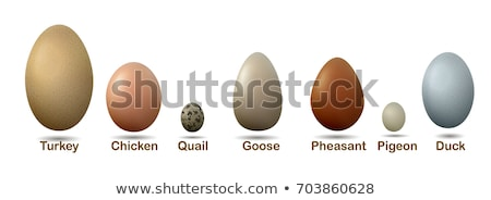 Different types of nests and eggs Stock photo © colematt