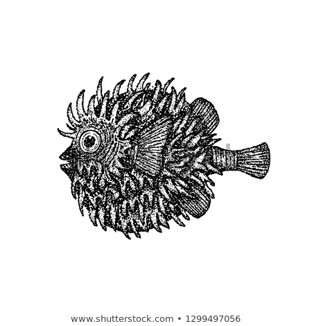 dotwork fish hedgehog stock photo © anna_leni