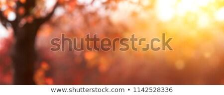 Gün batımı örnek gökyüzü çim Bina güneş Stok fotoğraf © colematt