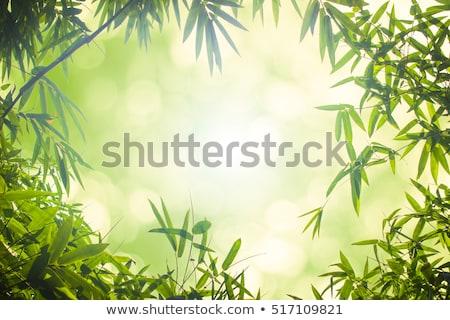 A panda on green blur background Stock photo © colematt