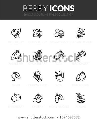 Szett gyümölcsök bogyók ikon szett ikonok eps Stock fotó © nosik