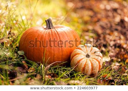 close up of pumpkin, acorns and autumn leaves Stock photo © dolgachov