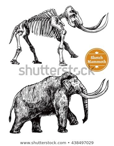 Exhibition in Natural Museum with Mammoth Skeleton Stock photo © robuart