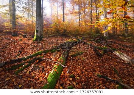 veado · floresta · piso · outono · laranja · jovem - foto stock © arrxxx