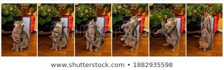 Gato descobrir árvore naturalismo pano de saco Foto stock © samsem