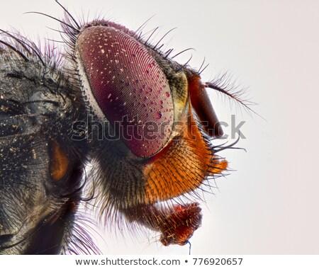 макроса лет портрет насекомое Сток-фото © mady70